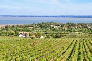 Wine region of Balatonfüred-Csopak