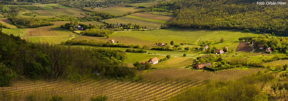 Őszi bortúra Badacsonyban